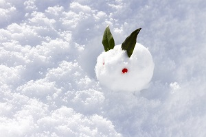 snow-rabbit_s